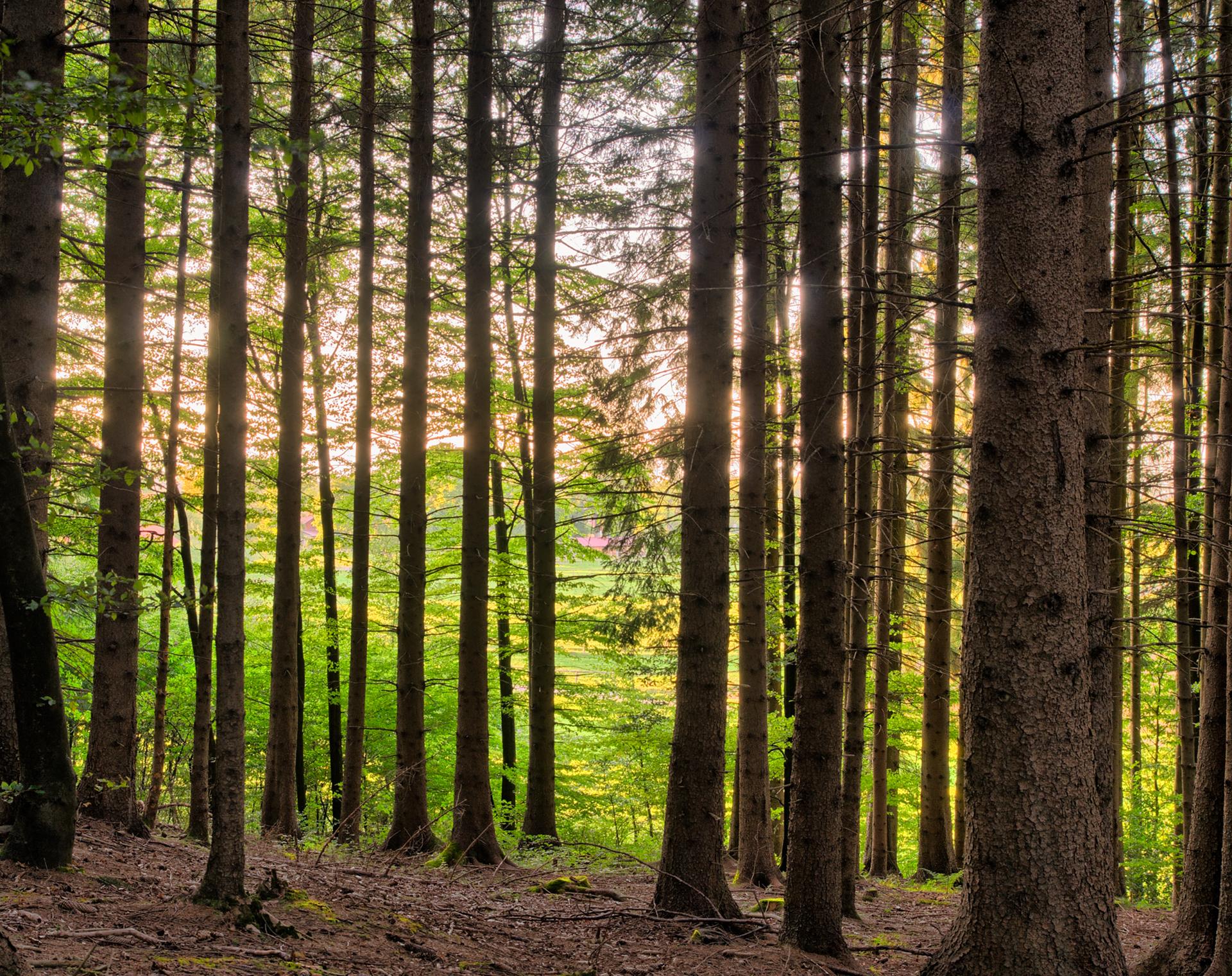 Sauver un arbre, une feuille à la fois