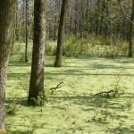 Le parcours des milieux naturels de Longueuil