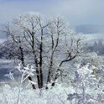 Le luxe en hiver avant de mourir